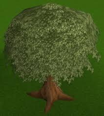 Fruit Trees Runescape - nice tree runescape wiki fandom powered by wikia