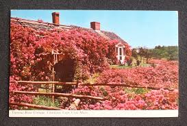 1960s famous rose cottage chatham ma barnstable co postcard