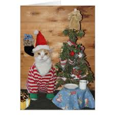 kitty greeting cards zazzle