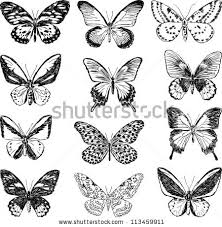 butterfly drawing stock images royalty free images u0026 vectors