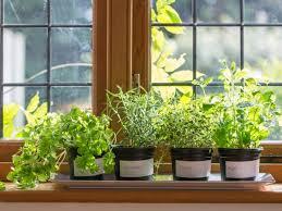 window herb harden how to plant a windowsill herb garden how tos diy