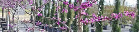 texas native plants nursery tree farm u0026 nursery in austin tx d u0026 b tree company