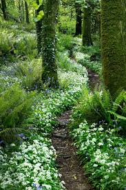 best 25 forest garden ideas on pinterest home to win ca dream