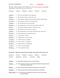 phases of mitosis worksheet answers free worksheets library