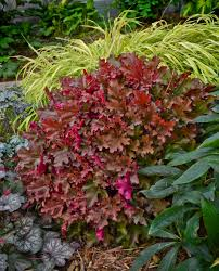 Heat Resistant Plants Winning The Battle Perennials That Thrive In Shade Proven Winners