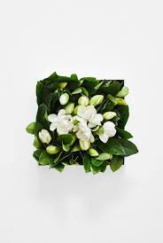 gardenia flower delivery 194 best high c supply images on pinterest gardenias floral