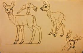 antelope drawings on paigeeworld pictures of antelope paigeeworld