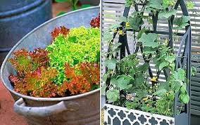 grow your own vegetables good greens in containers and small