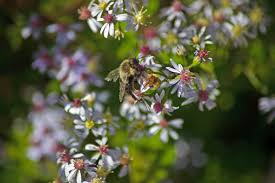 bumble bee spring flowers flowers free nature pictures by