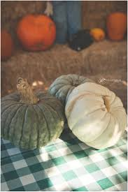 pumpkin patch maternity justin pumpkin patch maternity san luis obispo