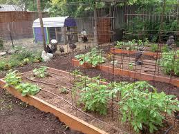 triyae com u003d backyard farmers and home gardeners various design