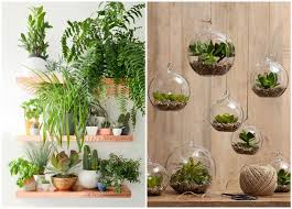 Decorate your home with indoor plants 5 easy home decor ideas