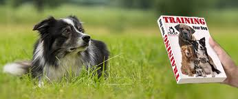 australian shepherd training books dog sweaters portsmouth nh 00210 43 0059 71 0132 are shock