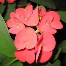 garden flowering plants indoor flowering plants flowering plants