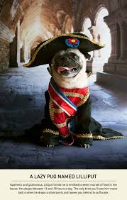 hilarious small dogs with a napoleon complex