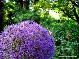 fiori viola l orto dei colori fiori viola