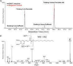 identification of an arabidopsis fatty alcohol caffeoyl coenzyme a