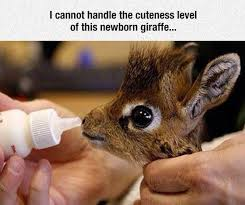 Baby Animal Memes - 1657 best animals images on pinterest animal babies wild