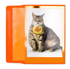 funny thanksgiving joke thanksgiving fat cat thanksgiving cards papyrus
