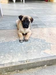buy u0026 sell pets in lebanon