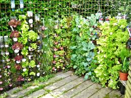 Container Gardening Ideas Popular Container Gardening Ideas Riothorseroyale Homes