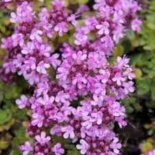blumen fã r balkon 34 besten garten bilder auf gartenpflanzen blumen