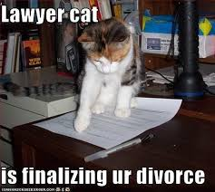 Lawyer Cat Meme - lawyer cat a little humor and a few cats pinterest cats