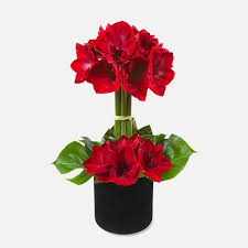amaryllis flowers manhattan amaryllis flower delivery manhattan plantshed