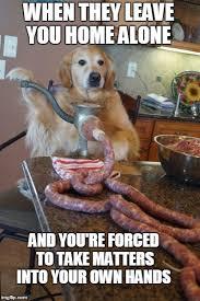 Dog Cooking Meme - not your regular sausage dog imgflip