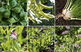 7 gourmet vegetables to plant now for fall harvest modern farmer