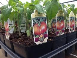 organic home garden zandalus net
