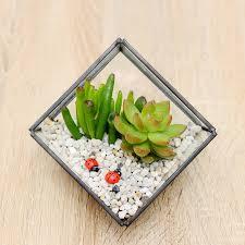succulent kits succulent glass cube terrarium kit by dingading terrariums
