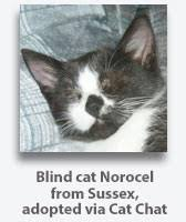 Blind Cat Sanctuary Disabled Cats Advice And Care Adopt And Adapt Cat Chat