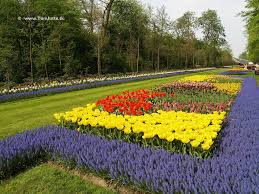 keukenhof flower gardens keukenhof flower garden a kingdom of tulips youramazingplaces com