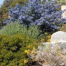 native plants california native plants inland valley garden planner