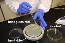 biol 230 lab manual spreading a sample with a glass rod and a