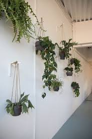 Interior Plant Wall 1591 Best Houseplants Images On Pinterest Plants Houseplants