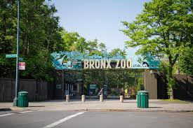 bronx zoo animal exhibits zoo events u0026 nearby family attractions