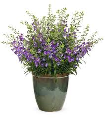 heat loving plants heat tolerant plants keeping gardens alive