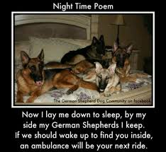 Pinterest     The world     s catalog of ideas Pinterest I don     t own a German Shepherd  but this one is too funny not