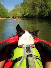 australian shepherd kayaking kayaking part 2 kevin u0026 amanda food u0026 travel blog