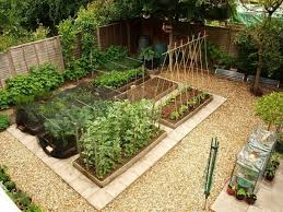 backyard vegetable garden with shed vegetable garden with