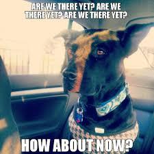 Dog In Car Meme - dog in car meme wayward dogs