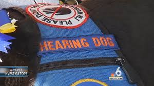 easy to obtain vests can make an untrained pet look like an