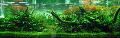 amano aquascape yeah aquascaping still stunning ada designed and