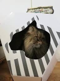 Cardboard Cat Scratcher House My Kotty Stylist Pet Cave Scratcher Meow Lifestyle