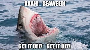 Funny Shark Meme - shark week fun imgflip
