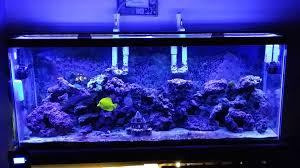 Aquarium Led Light Marine Aquarium Led Lighting Reviews With Best Led For Reef Tanks