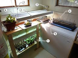 seed starting 101 u2013 the set up dirt dishes u0026 design