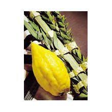 etrog lulav sets buy arba minim sets online
